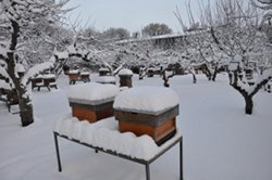 My hives in the snow